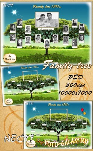 Template - the Genealogical (family) tree PSD