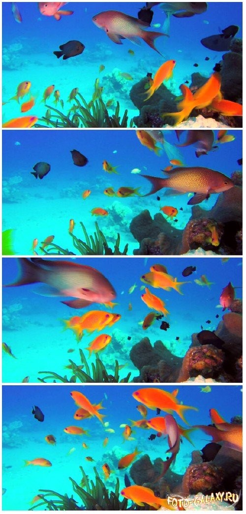 Footage Beautiful colorful underwater fish