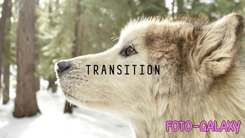Wolf Character Animation Kit 36853 - After Effects Templates