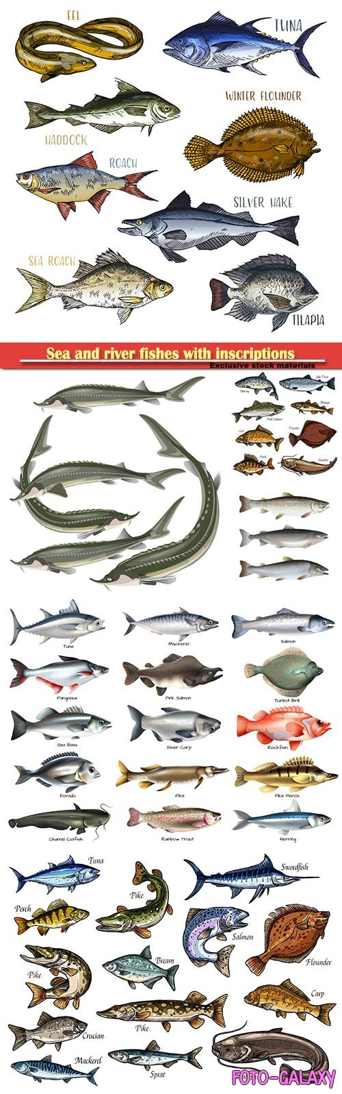 Sea and river fishes with inscriptions in vector illustration