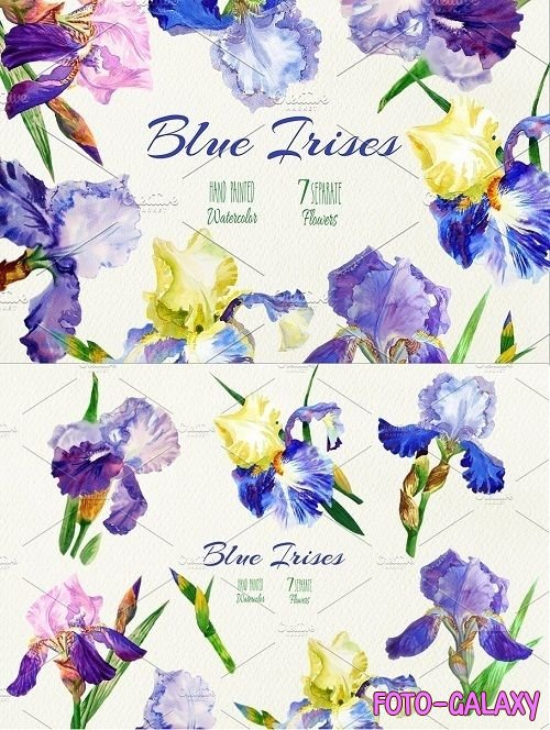 Blue Irises. Watercolor Clip Art - 522859