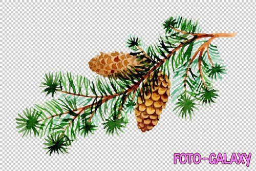 Branches of spruce and pine png set - 3082869