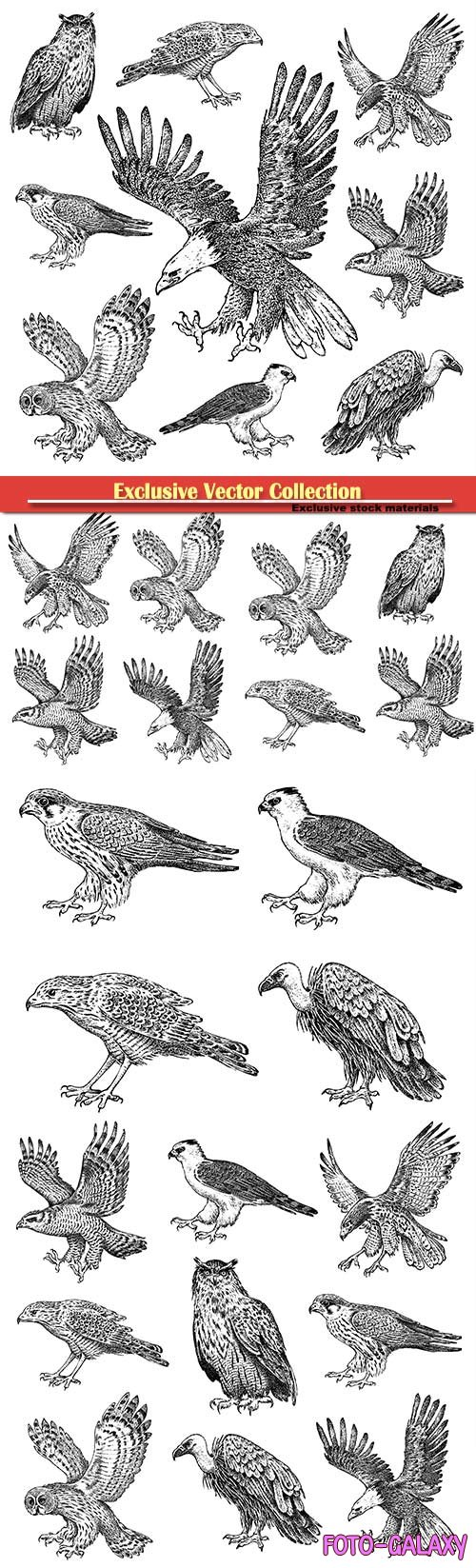 Vector drawn birds, owl, eagle, hawk