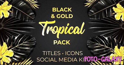Black and Gold Tropical Pack 314429 - After Effects Templates