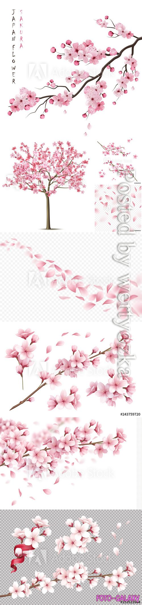 Cherry flowers background vector illustrations