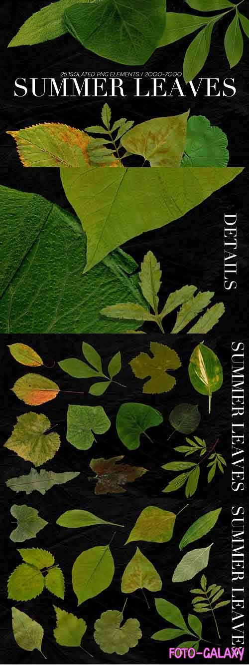 25 Isolated Summer Leaves - 800389
