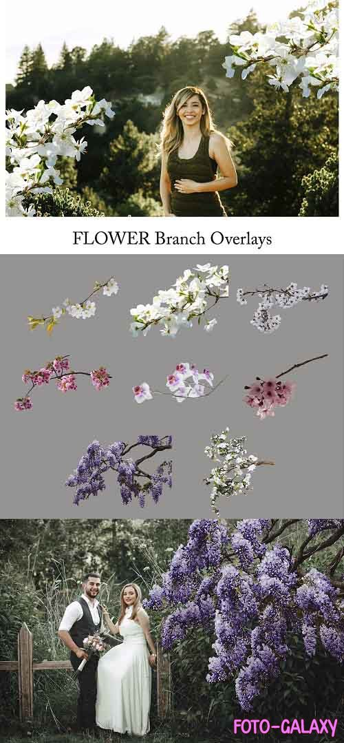 Flower Branch Overlays, PNG - 5264581
