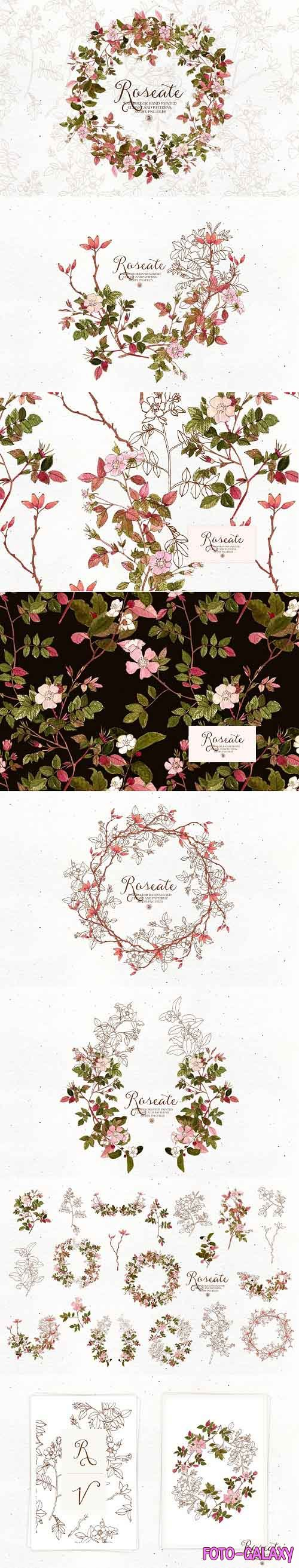 Roseate - watercolor floral clipart - 5807664